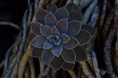 Fiore scuro Fotografie Stock