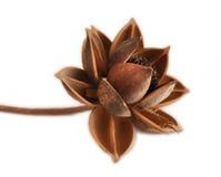 Fiore secco Immagini Stock