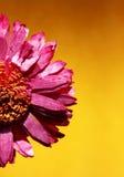 Fiore secco immagine stock libera da diritti