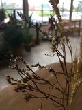 Fiore secco in caffè Fotografie Stock