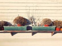 Fiore secco conservato in vaso sullo scaffale Fotografia Stock Libera da Diritti