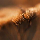 Fiore secco nel campo Fotografia Stock Libera da Diritti