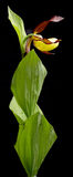 Fiore secco su fondo Fotografia Stock Libera da Diritti