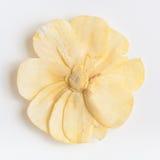 Fiore secco su un fondo bianco Fotografia Stock Libera da Diritti