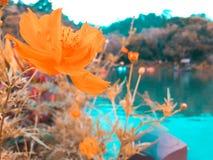Fiore selvaggio Immagine Stock