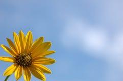 Fiore selvaggio Immagini Stock