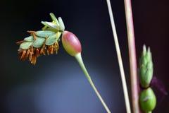 Fiore selvaggio Immagine Stock Libera da Diritti