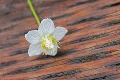 Fiore selvaggio Fotografie Stock