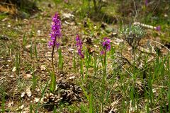 Fiore selvaggio Fotografia Stock Libera da Diritti