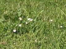 Fiore selvaggio stock footage