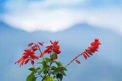 Fiore selvaggio al villaggio di Borong, Sikkim, India Fotografia Stock