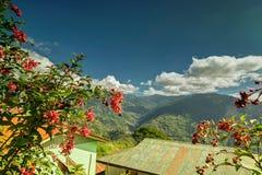 Fiore selvaggio al villaggio di Okhrey, Sikkim, India Fotografia Stock