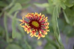 Fiore selvaggio alla spiaggia fotografie stock