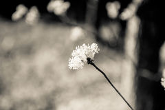 Fiore selvaggio con bokeh Immagini Stock Libere da Diritti