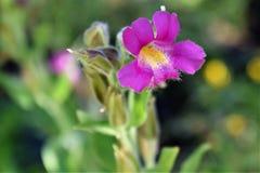 Fiore selvaggio del prato Immagine Stock