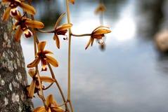 Fiore selvaggio dell'orchidea sulla palma fotografie stock