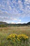 Fiore selvaggio della sorgente con le nubi Fotografia Stock