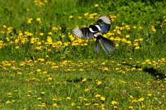 Fiore selvaggio e l'uccello Fotografie Stock