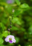Fiore selvaggio e una farfalla minuscola Fotografia Stock Libera da Diritti
