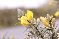 Fiore selvaggio giallo immagine stock
