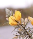 Fiore selvaggio giallo fotografia stock libera da diritti