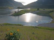 Fiore selvaggio lungo il fiume Snake sotto il cielo del cumulo nel Wyoming alpino Fotografia Stock