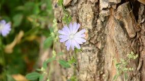 Fiore selvaggio nel giardino archivi video