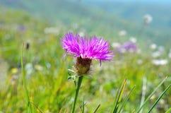 Fiore selvaggio nel prato immagine stock