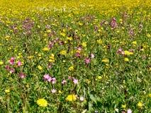Fiore selvaggio sul prato Fotografia Stock