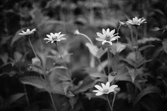 Fiore senza nome Fotografie Stock