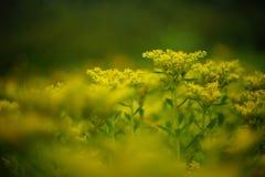 Fiore senza nome Fotografie Stock Libere da Diritti
