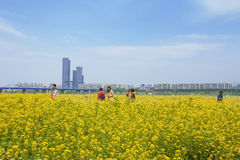 Fiore Seoul, Corea del Sud della violenza Fotografia Stock
