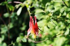 Fiore sfocato rosso Fotografia Stock