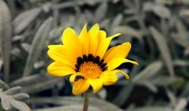 Fiore solitario fotografia stock libera da diritti