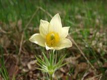 Fiore solo. Fotografia Stock