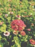 Fiore solo immagine stock
