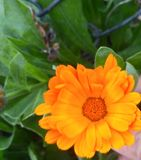 Fiore solo fotografie stock