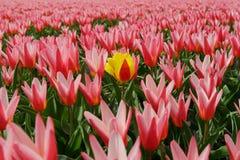 Fiore solo Fotografie Stock Libere da Diritti