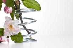 Fiore in sorgente del metallo Fotografie Stock Libere da Diritti