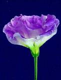 Fiore sotto acqua immagini stock libere da diritti