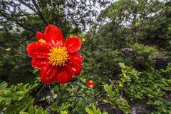 Fiore sotto la pioggia Fotografia Stock
