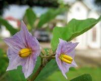 Fiore speciale dalla verdura in Tailandia immagini stock libere da diritti