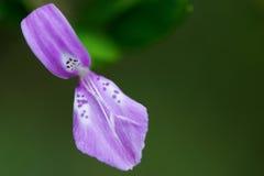 Fiore speciale in selvaggio Fotografie Stock