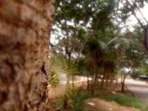 Fiore stupefacente dall'albero Fotografia Stock