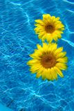 Fiore su acqua blu Fotografia Stock