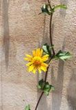 Fiore su calcestruzzo Fotografie Stock Libere da Diritti