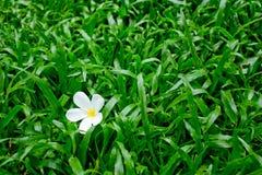 Fiore su erba Fotografie Stock
