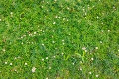 Fiore su erba verde Immagine Stock