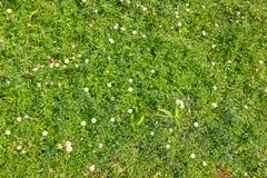 Fiore su erba verde Fotografia Stock Libera da Diritti