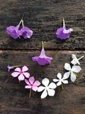 Fiore su fondo di legno fotografia stock libera da diritti
